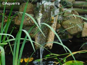 Einlauf zum Teich